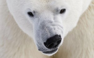 Week in wildlife: A polar bear growls at the St. Felicien Wildlife Zoo in St. Felicien