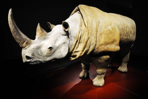 Rhinoceros at the V&A's new theatre and performance galleries