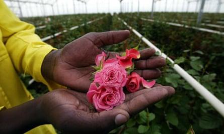 Flowers in Kenya