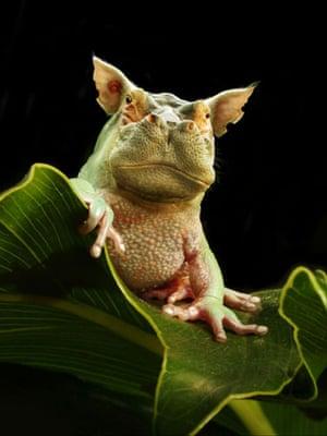 Hybrid animals photo competition: Froppotamus