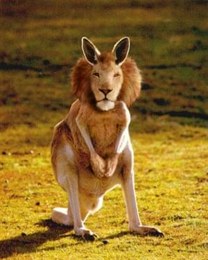 Hybrid animals photo competition: Kangarion