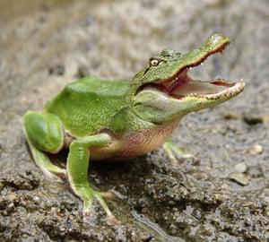 Hybrid animals photo competition: Frogodile