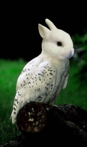 Hybrid animals photo competition: Rabbitowl