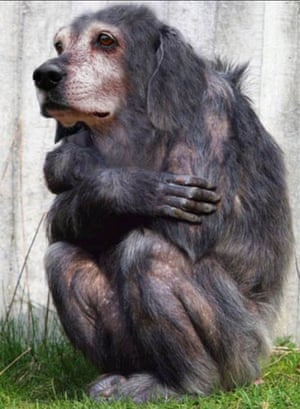 Hybrid animals photo competition: monkey/dog