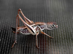 Hybrid animals photo competition: Turtlehopper