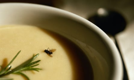 Fly in a bowl of soup