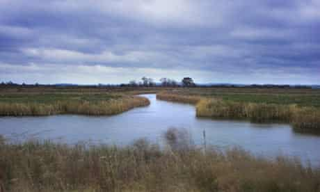 View showing reed beds and wetland area, Otmoor RSPB reserve, Oxfordshire. November 2005
