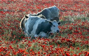 South Downs National Park: The Sussex Downs: Proposed as National Park
