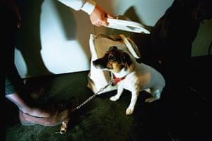 Eurotunnel : First pets allowed through Eurotunnel