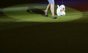 Crufts winners: Crufts Best in Show winner Charmin the Sealyham Terrier