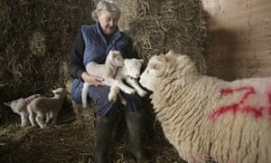 Farmer Roberta Edgar with some of the Exmoor horned sheep on her hill farm near Exford, Somerset