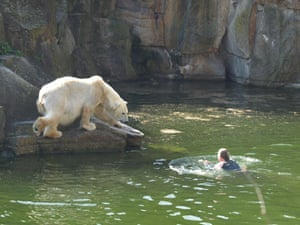 Polar bear attack: A woman jumped into a polar bear enclosure and was mauled by a bear