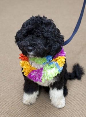 The Obama family's dog Bo: The Obama family's new dog, Bo