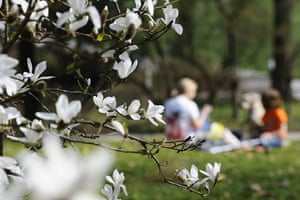 Blossom: German family picnic under blossom tree