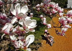 Blossom: Summer-like weather conditions facilitate blossoming throughout Hungary