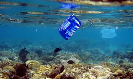 Fish swim along a coral reef  near a plastic water bottle label and a plastic bag