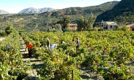 A new life in bloomin gin Crete's hills