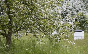 Traditional Orchards: Beehives and trees in blossom at Sissinghurst Castle Garden Kent