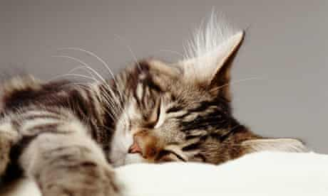 A sleeping pet cat