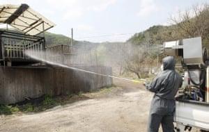 Swine Flu Outbreak: Health officials spray disinfectant at a pig farm in Chuncheon, South Korea