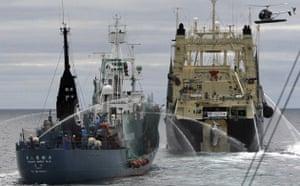 minke whale is loaded on to the Nisshin Maru factory ship