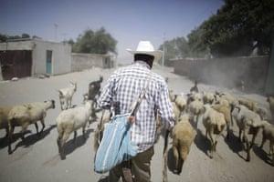 Swine flu La Gloria: A man herds a flock of sheep and goats along a street in La Gloria, Mexico.