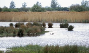 Wicken Fen: View of water fowl across the mere