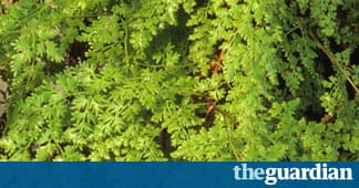 Gardens welcome to the family life and style the guardian for Garden trees b q