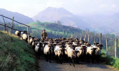 Shepherd with Goats on Rural Road in The Pyrenees, France