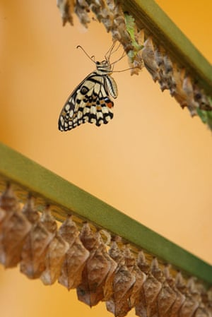 Week in Wildlife: The Natural History Museum Launch Their New Butterfly Jungle