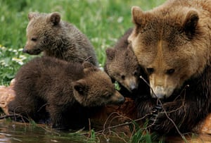 Week in Wildlife: Mother bear and new born