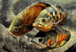 Week in Wildlife: Aquarium in Gdynia