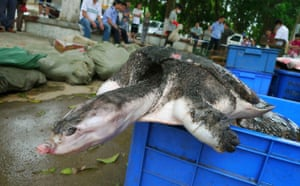 Week in Wildlife: Crackdown on the illegal trafficking of wild animals Nanning Guangxi China