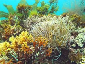 Underwater photography: Reef scene