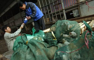 China animal markets: Kittens sold by the bag at a market in Guangzhou, China