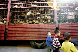 China animal markets: Dogs are transported in cages to Guangzhou market , Southern China.
