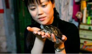 China animal markets: A woman holds a turtle which will be sold for food, at a market in China.