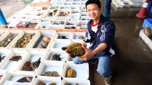 China animal markets: Turtles and terrapins for sale at a market in China