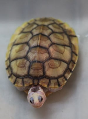 China animal markets: A turtle for sale at a market in China