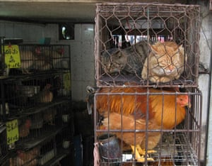 China animal markets: Cats are caged along with chickens at Qingping market in Guangzhou