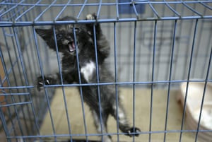China animal markets: A cat is caged at Qingping market in Guangzhou, China