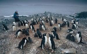 Climate change scientist : Global Warming: Bill Fraser on Litchfield Island, Antarctica