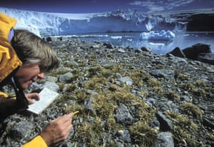 Climate change scientist : Global Warming: Tad Day at Point 8 near Palmer Station, Antarctica