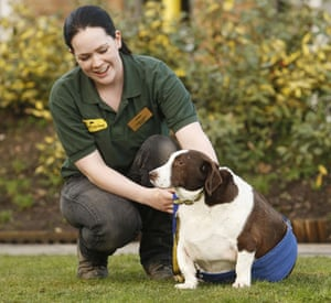 Overweight pets: 2009: Dogs Trust employee Catriona Burt with Patch the overweight dog