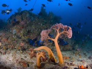 Indonesian coral: Soft Coral in Komodo National Park