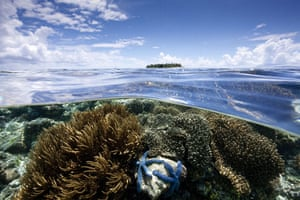 Indonesian coral:  Coral Reef and Island