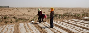 Minqin China: Farmers plant crops on the edge of the desert