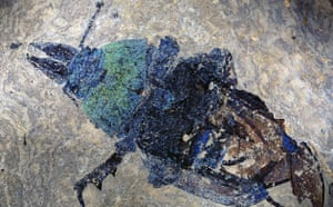 Grube Messel pit: Giant Ant Fossil from Messel Site