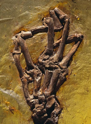 Grube Messel pit: Monkey Hand Fossil