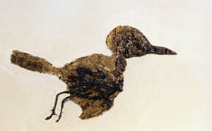 Grube Messel pit: Fossil of Small Bird from Messel Site